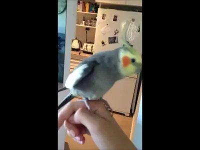 Dubstep yapan papağan! - Video İzle - İndir | videoindirelim com