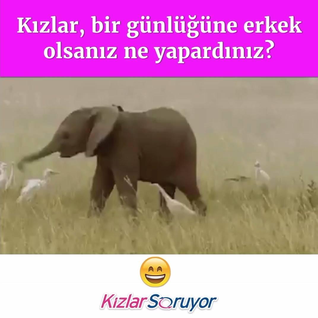 Хобот слона гиф