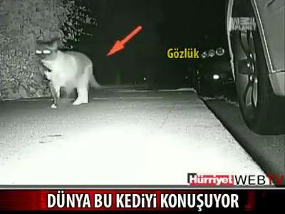 Kleptomani kedi ! Gördüklerinize inanmayacaksınız izleyin :) ile ilgili görsel sonucu