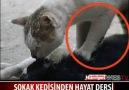 Kedi Ölen Eşine Kalp Masajı Yapıyor! (Türkiye)