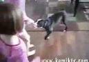 Sahibini Köpekten Koruyan Delikanlı Kedi .. alem yaa :)