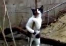 Stipriz Yapan Kedi :D