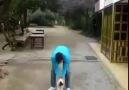 kedinin başı dönerse ne oLurrrr?? xDeee :)
