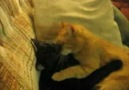 Kedilerin aşkı..