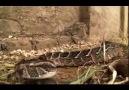 Afrikanın Ölümcül Avcıları