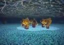 Animasyon: Hücreye Yolculuk - The Inner Life of the Cell