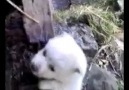 Anne Diye Bağıran Köpek Yavrusu ♥