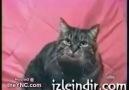 Bebek Taklidi Yapan Kedi =)))