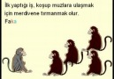 Beş Maymun..