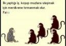 Bes Maymun Hikayesi ve Toplumsal Kurumsal Negatif Ögrenme