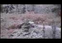Doğa Ve Yaban Hayatı   ( Büyük boynuzlu geyik avı )