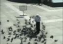 Güvercin Baskını