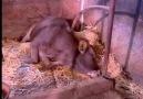 hayvanlarda iç ve dış parazitleer