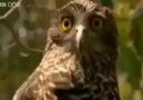 Hayvanlar Dile Gelirse xD - Müthiş Seslendirme