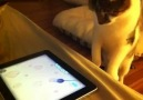 iPad ''Game for Cats''