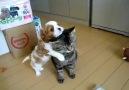 Kedi köpek dostluğu.. :))