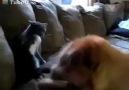 Kedi Köpek Kavggası :)