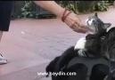 Kedi, Köpek ve Fare Dostluğu.