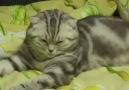 Kedinin uyku moduna geçişi :)
