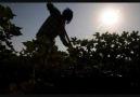 mevsimlik göç  (fındık işçileri)