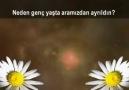 Nerdesin..!(Hz. Fatıma tuz Zehra Şehadeti) TR Alt Yazı