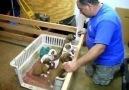 Ninni isteyen köpek yavruları :)