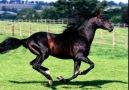 Rüzgar atlar gibi ve atlar rüzgar gibi...! [HQ]