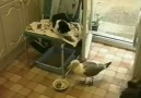Seagull Steals From World's Laziest Cat