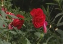 Sevdim Seni Mabuduma - Abdurrahman Önül