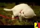 Son Dakika : Guiza'nın kedisi bulundu =)