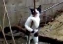 Stipriz Yapan Kedi xD