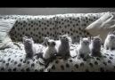 Techno Cats!