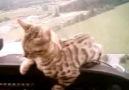 Uçan Kedi :D