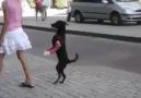 Yetenekli Köpek -)))