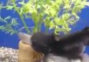 Aç Gözlü Balık