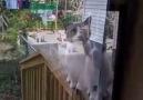 Aç kapıyı diye kızan kedi )