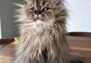 Acunn.Com - Yeni uyanmış minnoş kedi Facebook
