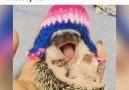 Admit it you want a hedgehog now