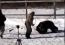 A dog hardly saved from claws of a wild bear in Russia