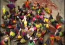 A flock of coloured pigeons