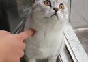 Ah bu kediler D D