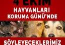 Ajanimo - 4 Ekim Hayvanları Koruma Günü&Söyleyeceklerimiz Var! Facebook
