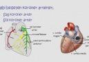 Akut Koroner Yetmezlik - EKG ve Güncel Protokoller