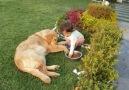 alimentando a mascota
