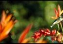 ALLAH'ın Mucize Ayetleri - İşte Allah'ın Yaratışı!  (HD)