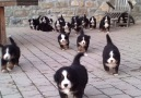 ALL THE PUPPIES!!!!!