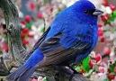 Amazing Beautiful Colors of Birds