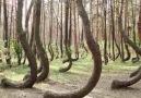 Amazing trees around the world!