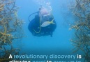 An accidental discovery is giving new hope for coral reefs.BBC Earth