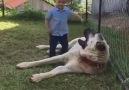 Anadolu Çoban Köpeği Ve Çocuk